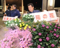 JAL puts on a special cargo service to get New Year chrysanthemums from Okinawa to all parts of the country