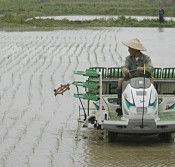 Planting of rice begins on Ishigaki Island - the earliest in Japan