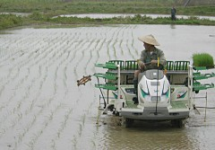 Planting of rice begins on Ishigaki Island - the earliest in Japan