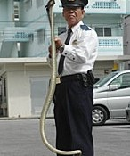"Police officer ""apprehends"" a 1.5 meter long <em>habu</em> at Yagaji - police officials send a cautionary message to the public earlier than in normal years"