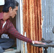 Uruma resident feeds blue rock thrush by hand