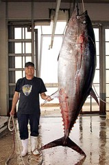 Captain Yohena lands the big tuna in Kumejima