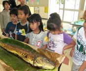 Large <em>manbika</em> fish served in Kitanakagusuku school lunches