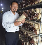 TAKI Farm to produce large volumes of Ryukyu Wood Ear (<em>Auricularia auricula-judae</em>) edible fungus in Nishihara