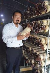 TAKI Farm to produce large volumes of Ryukyu Wood Ear (<em>Auricularia auricula-judae</em>) edible fungus in Nishihara