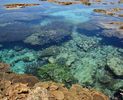 Yabiji coral reef community and tsunami stones designated as natural treasures