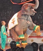 Kinoshita Circus commences in Toyosaki Town