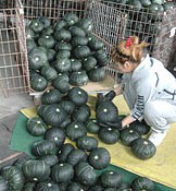 Pumpkin production revives