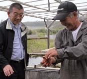 Head of Iwaki Fisheries Cooperative studies sea urchin breeding in Okinawa