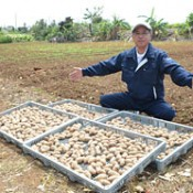 Farming corporation to increase <em>kuga-imo</em> yam production