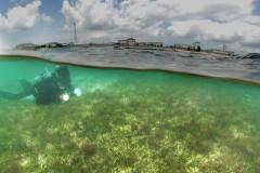Rich biogeocenosis located 100 meters offshore from Camp Schwab