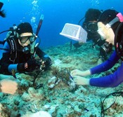 Scuba diving group launches campaign to save coral reef
