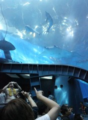 Dolphin in giant aquarium of Okinawa Churaumi