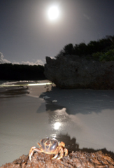 Crabs spawn under full moon