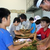 Pupils pick tea in Nago