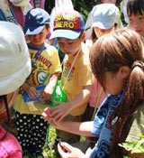 People enjoy seeing and collecting insects in Takae