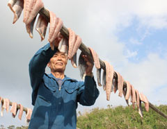 Drying dolphinfish in the sun in Kunigami