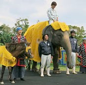 How do I look? Elephant wears <em>Chibana hanaori</em> outfit