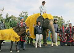 How do I look? Elephant wears <em>Chibana hanaori</em> outfit