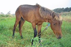 Yonaguni horse rescued from stranded cargo ship after 11 days