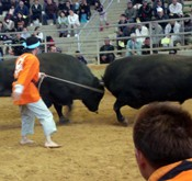 New Year bullfighting tournament held in Uruma City