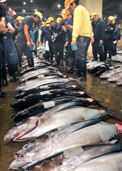 New Year's first auction at Tomari Fish Market in Naha