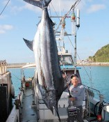 Big blue marlin caught off the coast of Kumejima