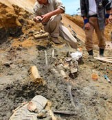 DNA analysis identifies human remains in the Battle of Okinawa