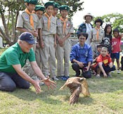 Grey-faced Buzzard recovers from injury in Okinawa