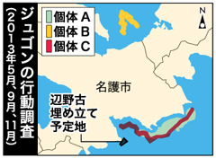 Okinawa Defense Bureau confirms traces of dugongs eating seaweed in the sea around Henoko