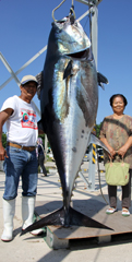 Giant bluefin tuna caught off Kumejima Island