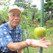 Okinawan farmer taking on the challenge to grow apples in the prefecture