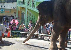 Odd-behaving animals at Okinawa Zoo and Museum