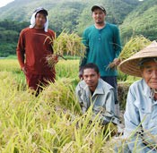 Trainees from the Philippines help elderly rice farmers in Tokashiki
