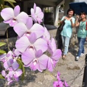 Orchid flowers  attract visitors on Kinjo Dam Street in Naha