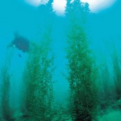 Huge marine algae community in Oura Bay