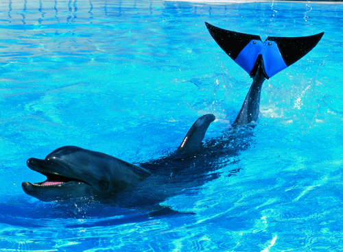 Aged dolphin with artificial tail fin dies at Okinawa aquarium