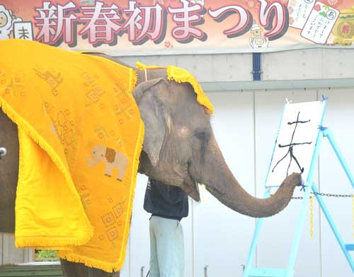 Elephant Ryuka does first calligraphy of the year
