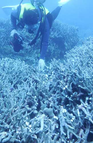 Coral community in Oura Bay damaged