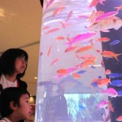 Okinawa Churaumi Aquarium exhibiting fish from coral reefs in Okinawa