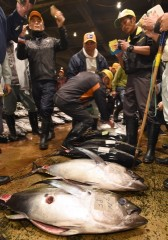 The year's first auction at Tomari Fish Market