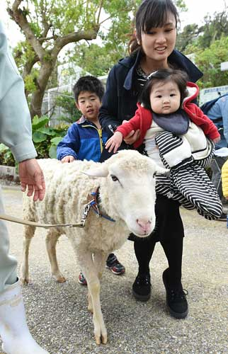 Two sheep join Okinawa Zoo and Museum