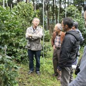 Coffee harvest tour in Higashi