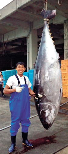 Big Bluefin tuna landed at Ishigaki fishing port