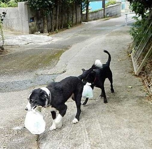 Dogs learn from owner to take garbage out