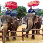 Two elephants from Fukushima return to Okinawa Zoo and Museum