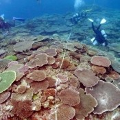 Coral reefs in Oura Bay recovering from El Nino