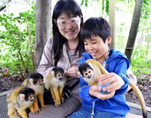 Squirrel monkeys in Ishigaki attract visitors wishing for a wonderful year