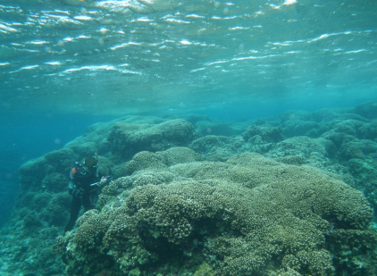 130-meter long coral reefs found in Gushikawa Island, Izena