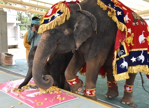 Happy birthday for elephant Ryuka